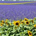 Things to Consider When Buying a Rural Property in France